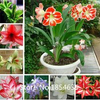 Wholesale Cheap Wholesale Bonsai - High quality Amaryllis seeds, free shipping cheap Amaryllis seeds, Barbados lily potted seed, Bonsai balcony flower - 100 pcs ba