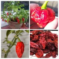 Wholesale Wholesales Chile - 20 Bhut Jolokia chilli Ghost Chile Seeds very hot DIY home garden Free Shipping TT205