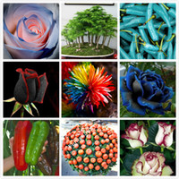 Wholesale Easy Life - 270 DIY Garden & kicthen balcony Mixed flower fruit vegetable bonsai seeds give you a happy life easy growing