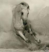 ölfarbe leinwand weißes pferd großhandel-100% altes handgemaltes Ölgemälde auf Leinwand-White Horse (ohne Rahmen) handgefertigt