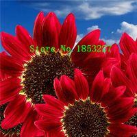 Wholesale Sunflower Seeds Wholesale - 50 pcs Helianthus Red Sunflower Seeds Red Sun Fortune Bloom Garden Heirloom Seeds Bonsai Plants Seeds OM