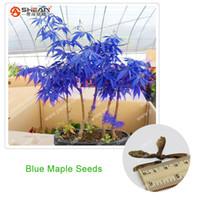 ingrosso piantare alberi di acero-Rare Blu Semi di Acero Semi di Acero Bonsai Piante In Vaso Giardino Giapponese Semi di Acero 10 Pezzi / lottp