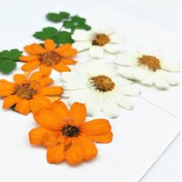 Wholesale flower manufacturers - Orange   White Zinnia DIY Pressed Flowers Aroma Wax Handmade floral Pressed Flowers Wholesale Free shipment Factory Manufacturers 120pcs