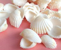 Wholesale Crafts Natural sea shells cm white color home decor aquarium decoration nautical wedding decoration