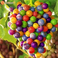 Wholesale Import Pack - 100 Seeds   Pack Imported Rainbow Grape Seeds Advanced Fruit Seed Natural Growth Grape Delicious Fruit Plants