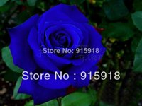Wholesale Blue Lovers Tree - (FREE SHIPPING ,NOW BUY ONE GET ONE FREE ,GET 400Seeds )Chinese Blue Rose Seeds Your Lover Plant For Sweet Lover