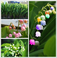 Wholesale Beautiful Lily - 20 pcs Lily of the Valley flower seeds , bell orchid seeds,rich aroma ,bonsai flower seed, so cute and beautiful Free Shipping SS070