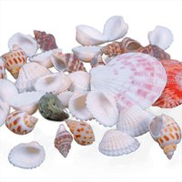 Wholesale Beach Shells Crafts - New Approx 100g Beach Mixed SeaShells Mix Sea Shells Shell Craft SeaShells Aquarium #67179