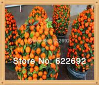 plantas laranja venda por atacado-50 Pcs Mini vaso sementes de frutos comestíveis Bonsai sementes laranja China (Quanzhou) escalada laranjeira sementes plantas de escalada + presente