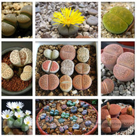 ingrosso litici succulenta i semi-Ciottolo Piante Mix Cactus Lithops Succulente Semi Living Seeds, Professional Pack, 100 Seeds / Pack # NF964