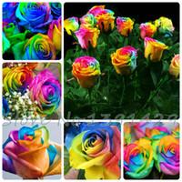 sementes de flores planta de rosas venda por atacado-O envio gratuito de 100 Sementes Raras Holland Rainbow Rose Flor Amante Multi-cor Plantas Início Jardim raro rainbow rose flower seeds