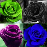 Wholesale China Rose Flower - ROSE SEEDS 9 Kinds 900 Rare Rainbow Pink Purple Green Black White Red Blue Rose Seeds Free Shipping from China
