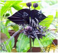 ingrosso fiori di orchidea bonsai-Semi di Black Tiger Shall Orchid, spedizione gratuita a buon mercato Semi di tigre, semi di orchidee in vaso, Bonsai balcone fiore - 100 pezzi / borsa