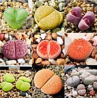Wholesale Wholesale Raw Stones - 30%OFF 100pcs Lithops seeds Pseudotruncatella Succulent Seeds raw stone flower seeds succulent plants Cactus Seeds