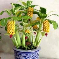 plantação de jardim venda por atacado-100 pçs / saco Bonsai Amarelo Sementes de Banana Bonsai Fruta Semente Subtropics Vegetal Semente De Fruta, Planta Da Semente Da Herança orgânica Para Casa Jardim