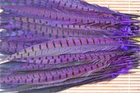 ringneck pheasant feathers Canada - Wholesale 100pcs 12-14inch purple ringneck pheasant feather pheasent feather costumes feather pheasant feather for halloween supply