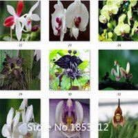 orchids for sale - HOT SALE Black Tiger Shall Orchid Flowers Seeds Rare Flower Orchid Seeds For Garden Home Plants