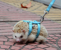 Wholesale NEW Adjustable hedgehog Harness for Training Playing traction rope High Quality