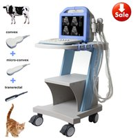 Wholesale Probe Vet - Three probes(convex+trans-rectal+micro-convex) pig horse cattle cat sheep cattle dog farm use animal ultrasound, veterinary ultrasound, vet