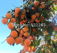 Wholesale persimmon fruit resale online - DIY Home Garden Plant Seeds PERSIMMON TREE Diospyros Fruit Seeds