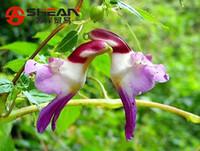ingrosso piante radiazioni-Rare Colorful Like Parrot Orchid Seeds Bonsai di alta qualità Piante da fiore Assorbimento di radiazioni - 50 PZ