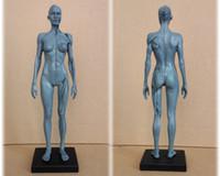 Wholesale Skeleton Head Sale - 1:6 30cm Human female Model Anatomy Skull Head Muscle Bone magnet Medical Artist Drawing skeleton for sale