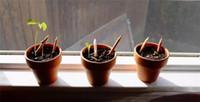ingrosso semi di erbe crescenti-JUXU 8 pz / pacco Matita Pianta Divertente Ecologia di Legno Disegno matite può essere germogliato per crescere Erba Plantable Germogliare Piante Semi Per I Bambini Regalo