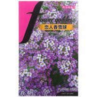 amante de la flor morada al por mayor-Flores y amantes, bola de nieve, semillas de flores púrpuras, 80 semillas / bolsas en maceta en el balcón / oficina familiar