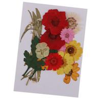 marguerites artisanat achat en gros de-1 ensemble de multiples fleurs pressées mixtes Rose Daisy Larkspur Myosotis Real séchées de fleurs pour résine Casting fabrication de bijoux artisanat