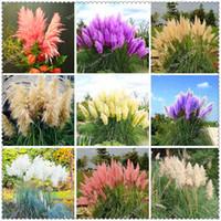 500 pcs   bag Imported Pampas Grass Seeds Outdoor Ornamental Plant Flowers Bonsai Cortaderia Selloana Grass for Home Garden Easy to Grow