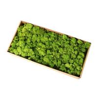 ingrosso paesaggio secco-500g naturale renna muschio conservato artigianato secco fiore foto fai da te micro paesaggio decorazione rifornimento del partito di nozze