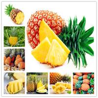 100 Pcs Ananas Comosus Pineapple Bonsai Heirloom Fruit Garden Bonsai Sweet Juicy Delicious Fruit Potted plant DIY Bonsai Plant