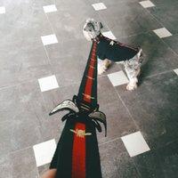 freie leine groihandel-Hundehalsband Flashers Sicherheits-Kragen-Haustier-Leinen Mode Teddy Schnauzer Adjustable Bügel-Weste-Kragen-Auto-Sicherheitsgurt-freies Verschiffen
