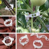 ingrosso giardino di rattan-Hot alta quanlity Garden Plant Supporto clip di plastica legato rattan clip pomodoro Anello fibbia attrezzi da giardino T7I5019