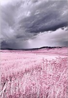 Wholesale oil painting lavender wall art for sale - Group buy ZYXIAO Print Lavender cloud oil painting on Canvas Professional Art Poster No Frame Wall Picture for Living Room Sofa Home Decor YH0296