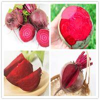 bio-pflanzer großhandel-100 stücke Saftige Rote Beete Garten Im Freien Bonsai Planta Boltardy Rote Beete Organische Gemüse Topfobst Pflanze für Blumentopf Pflanzer