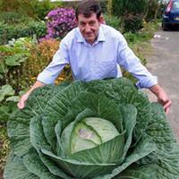 ingrosso semi di verdure del balcone-100 Pezzi Rare Gigante Semi di Cavolo Russo Alta Qualità Sano Organico Vegetale Fiore Piante Perenni Balcone Giardino