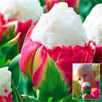 semillas muy raras al por mayor-Nuevas semillas! 10 PC / porción de col raras plantas de tulipán. Muy rara flor Bonsái Plantas de jardín Bonsai en maceta plantas, planta De Flores