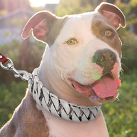 Wholesale choke collar dogs for sale - Group buy Strong Metal Dog Chain Collars Stainless Steel Pet Training Choke Collar For Large Dogs Pitbull Bulldog husky puppie Silver Gold Show Collar