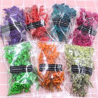 Wholesale dried flower cards for sale - Group buy 1 Bag Real Pressed Dried Flowers Colored crystal grass Floral Plants Embellishments For DIY Scrapbooking Card Making Art Craft Decoration