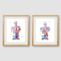 Wholesale abstract body painting wall art for sale - Group buy Human Muscles Canvas Art Print And Poster Watercolor Muscular System Skeleton Anatomy Painting Body Art Print Wall Decor