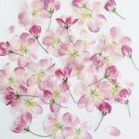 flores postales al por mayor-60 piezas prensado secado rosa Malus Spectabilis flor / brotes planta herbario para joyería postal tarjeta de invitación caja del teléfono DIY