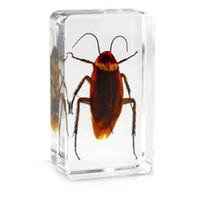 brinquedos insetos para crianças venda por atacado-Barata Biologia Espécime De Resina Acrílica Embutidos Insetos Reais Paperweight Transparente Rato Do Bloco Do Miúdo New Science LearningEducation Brinquedos