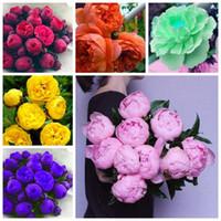 şakayık çiçek tohumları toptan satış-10 adet / torba nadir çift şakayık tohumları, çok yıllık şakayık çiçekleri ev bahçe tesisi çiçek tohumları Çin Paeonia Suffruticosa tohumları