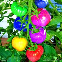 çok nadir bulunan tohumlar toptan satış-100 tohum / paket çok nadir gökkuşağı domates tohumları, meyve ve sebze tohumları, organik bonsai ve bahçe olmayan GDO, büyümek kolay