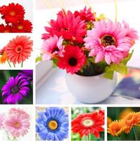 flores para jardines perennes. al por mayor-100 piezas de semillas de gerbera, semillas de flores de plantas de bonsai de interior, semillas de flores de margarita perenne Jardín familiar Crisantemo fácil de cultivar