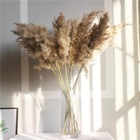 plantar flores venda por atacado-10pcs reais secas Plantas da flor do casamento pequeno Pampas Grama Grupo Natural Decor Home Decor Flores secadas