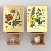 Wholesale canvas art poppies resale online - Vintage Botany Prints Poppy Velvet Plant Poster Wall Art Canvas Painting Medicinal Plants Encyclopedia Posters Home Decor
