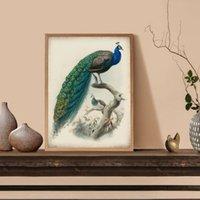 Wholesale art paintings peacocks resale online - Beautiful Peacocks Bird Illustration Print Vintage Poster Bird Peacocks Picture Retro Wall Art Canvas Painting Living Room Decor