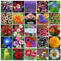 Wholesale Varieties Fragrance - 30 Varieties Package Flower 5670 Seeds Cheerful Fresh-looking DIY Home Garden Flower Delightful Fragrance Free Shipping TC006-30HH